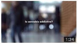 Is cannabis addictive? Video